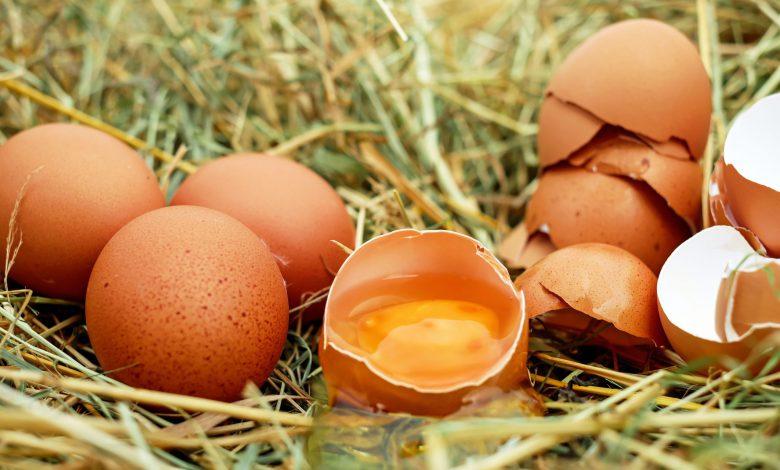고양이 계란