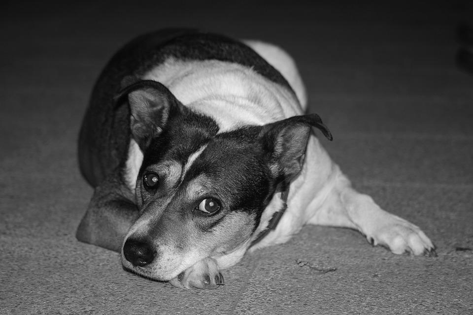 강아지 분리불안