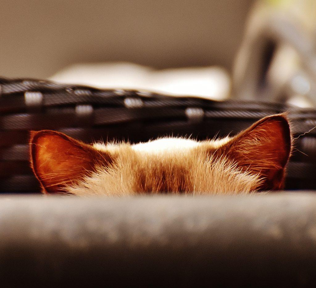 고양이 귀