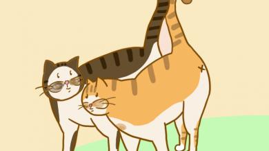 고양이 인사