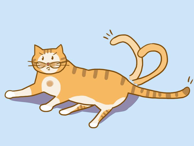 고양이 화남