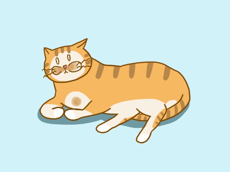 고양이 꼬리