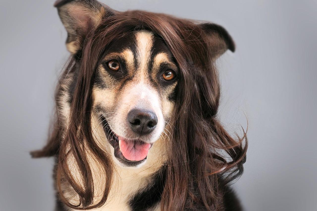 강아지 털