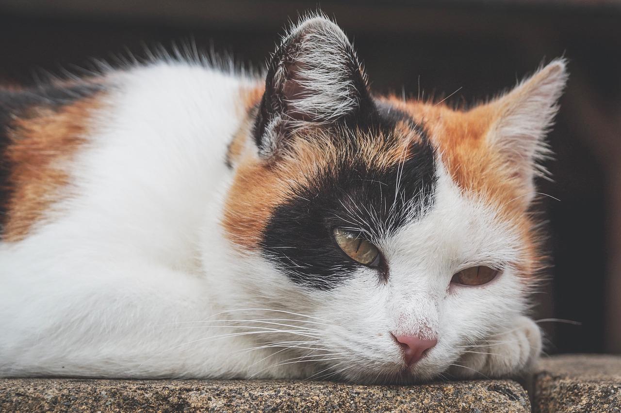 무시하는 고양이