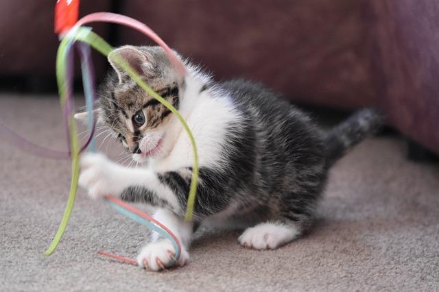 고양이 끈