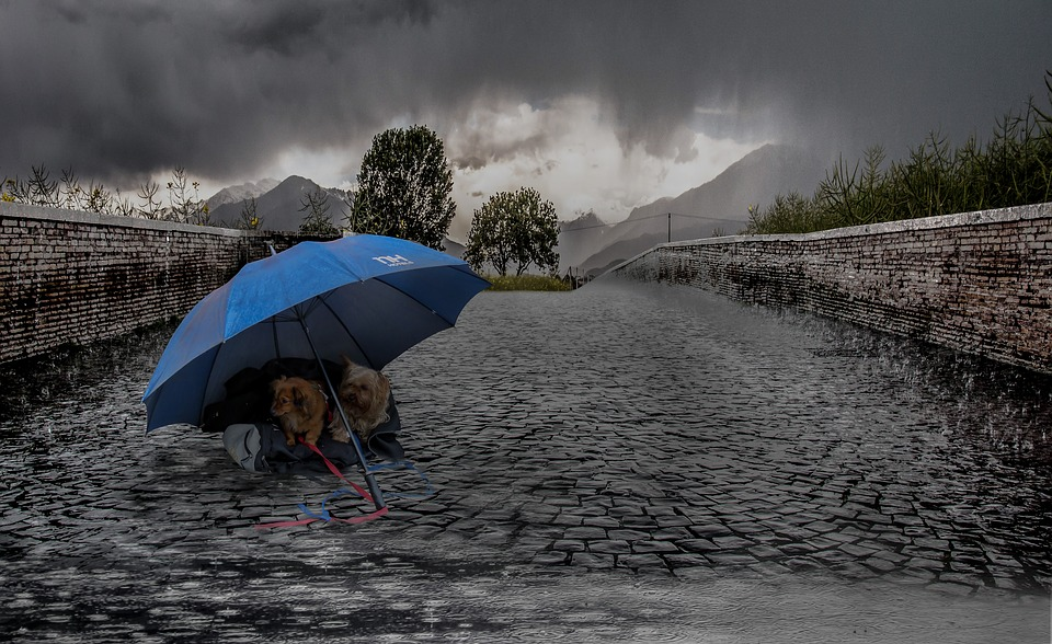 강아지 비오는 날 산책