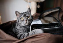 고양이 중성화 수술