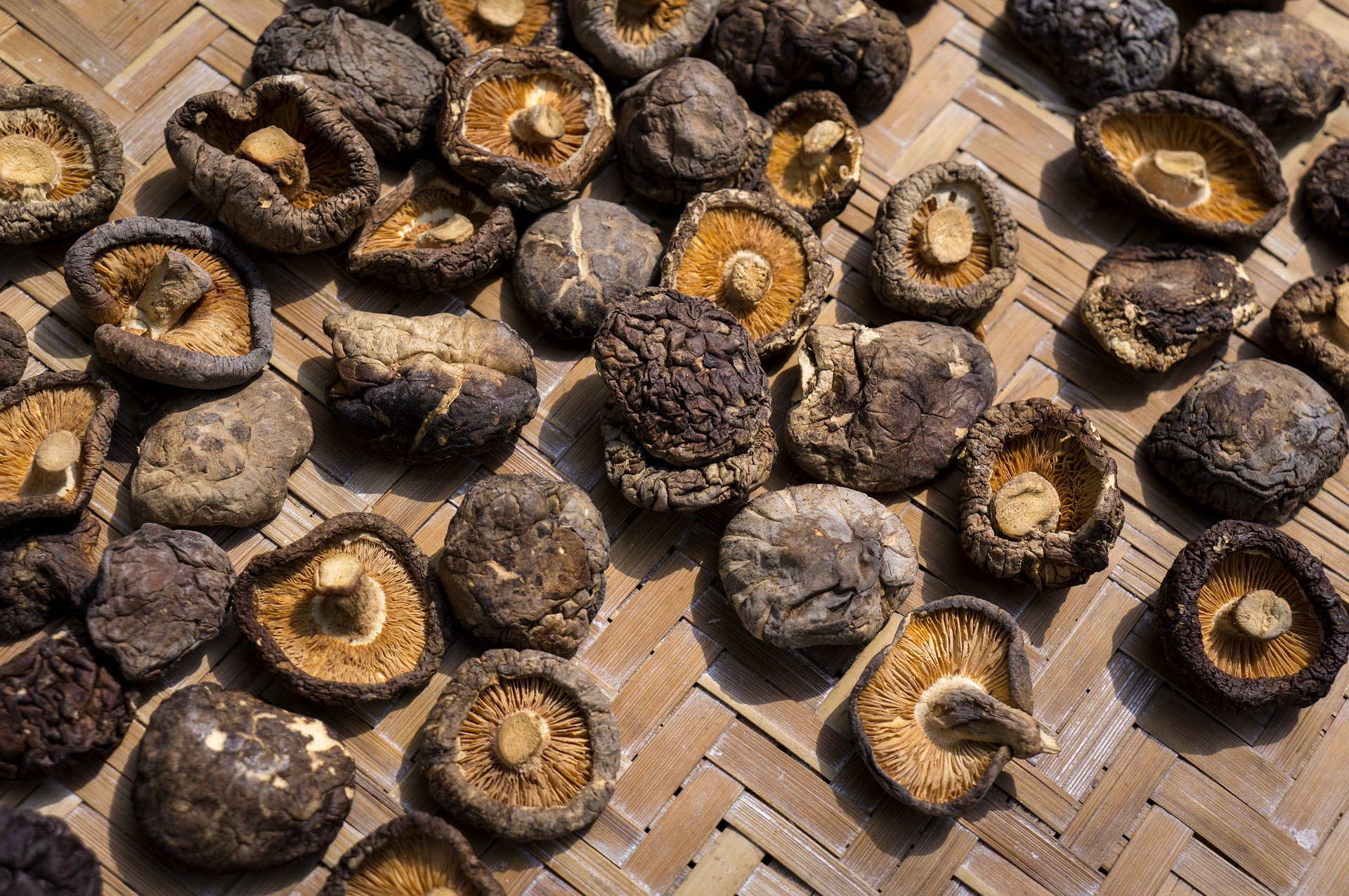 고양이 표고버섯