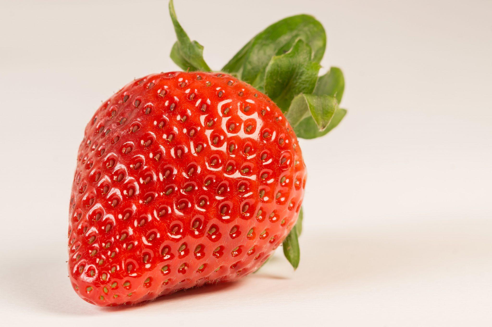 고양이 딸기