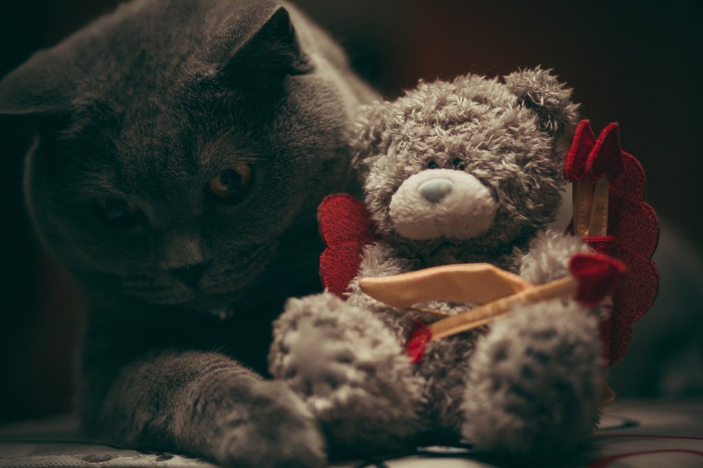 고양이 장난감