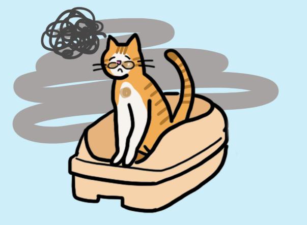 고양이 설사