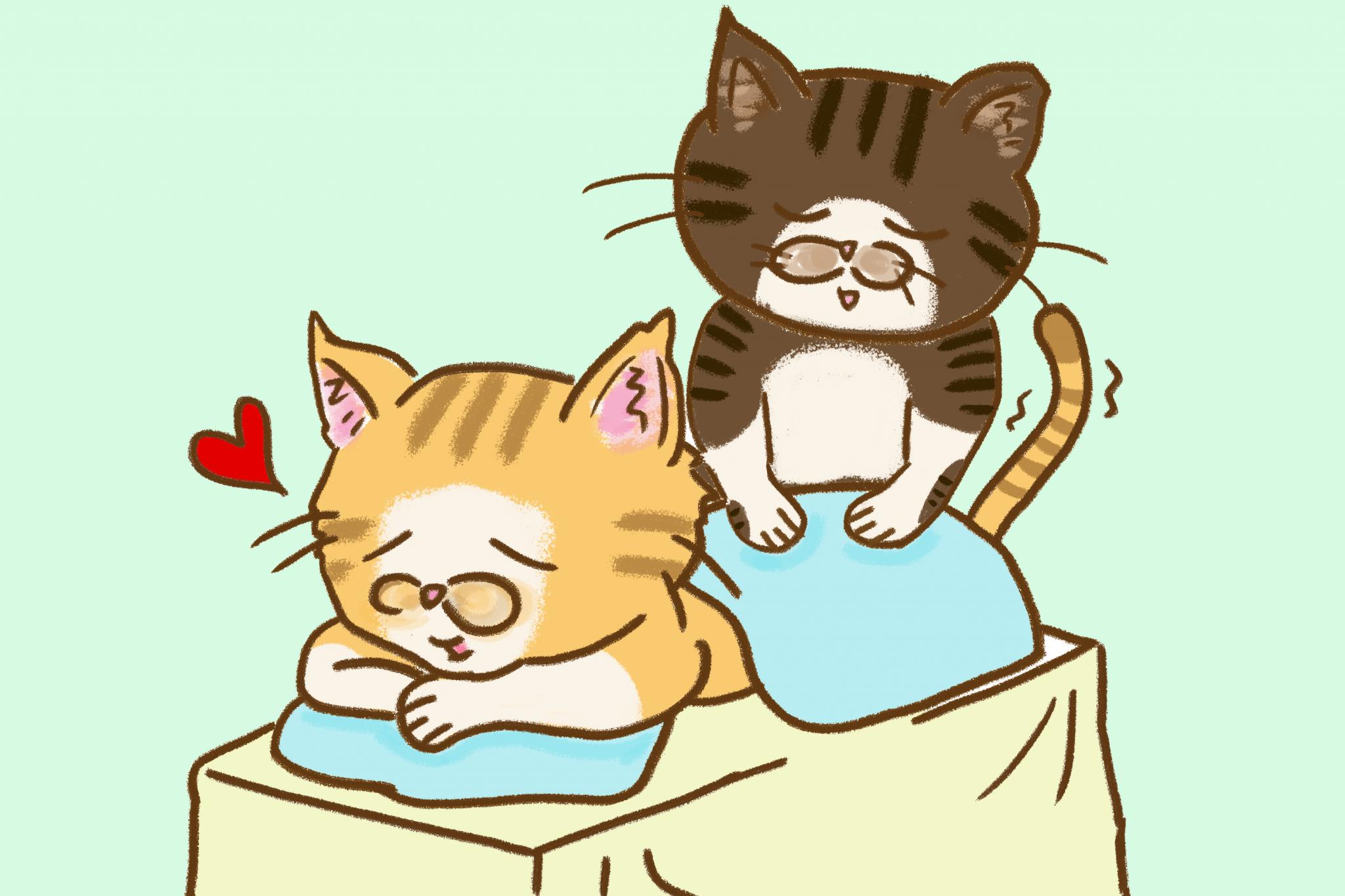 고양이 마사지