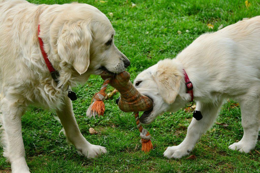 강아지 장난감