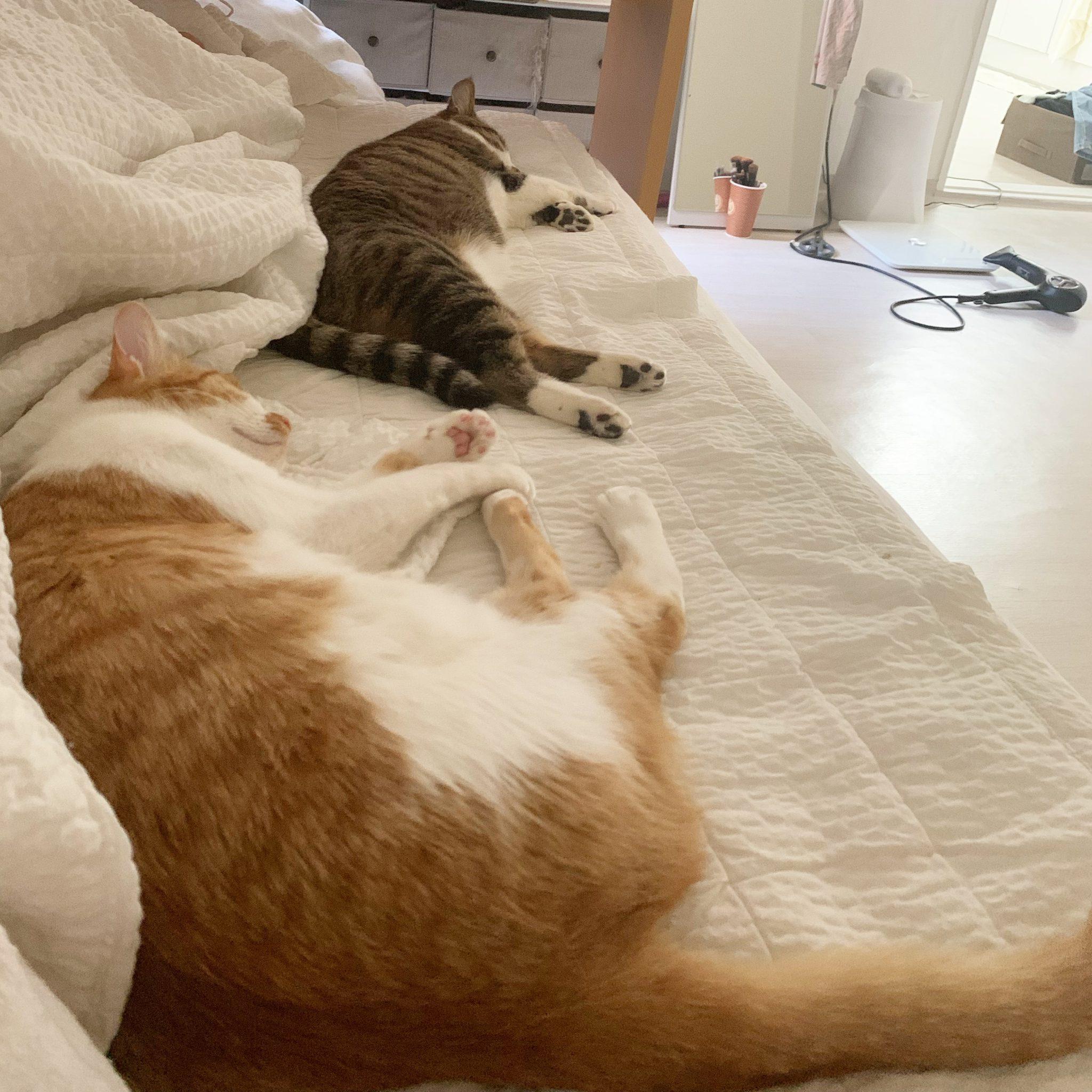 고양이 자는모습