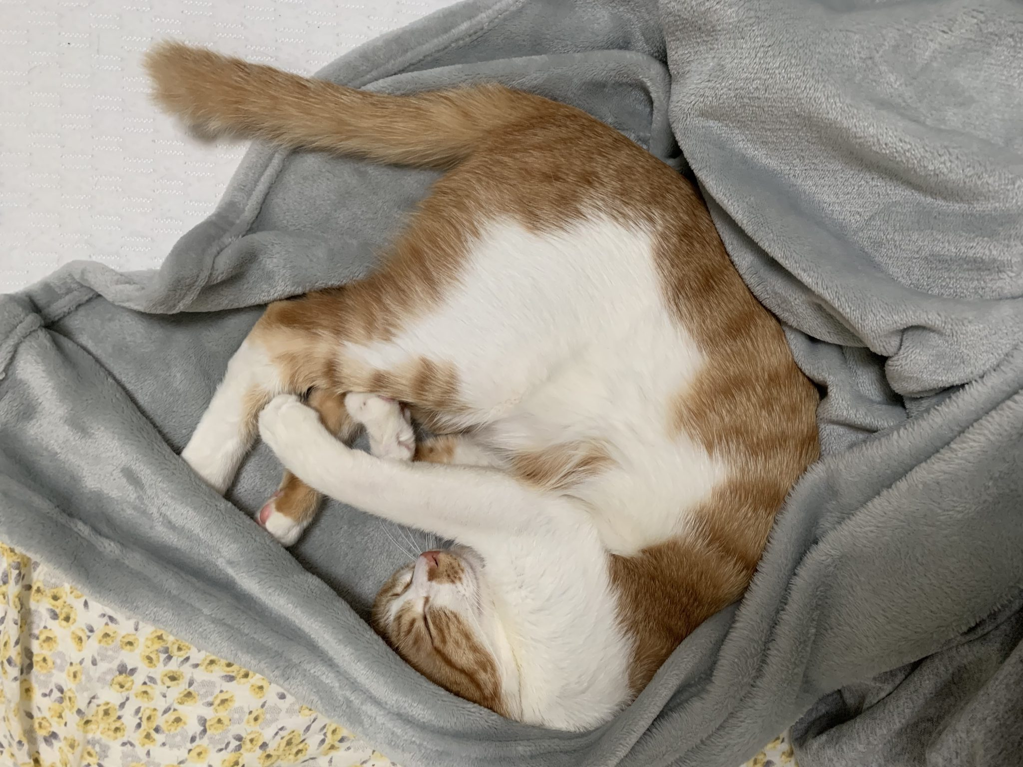 고양이 자는 자세
