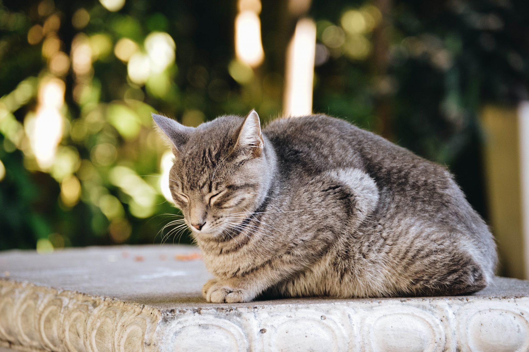 고양이 자는 모습