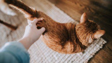 고양이 애정표현