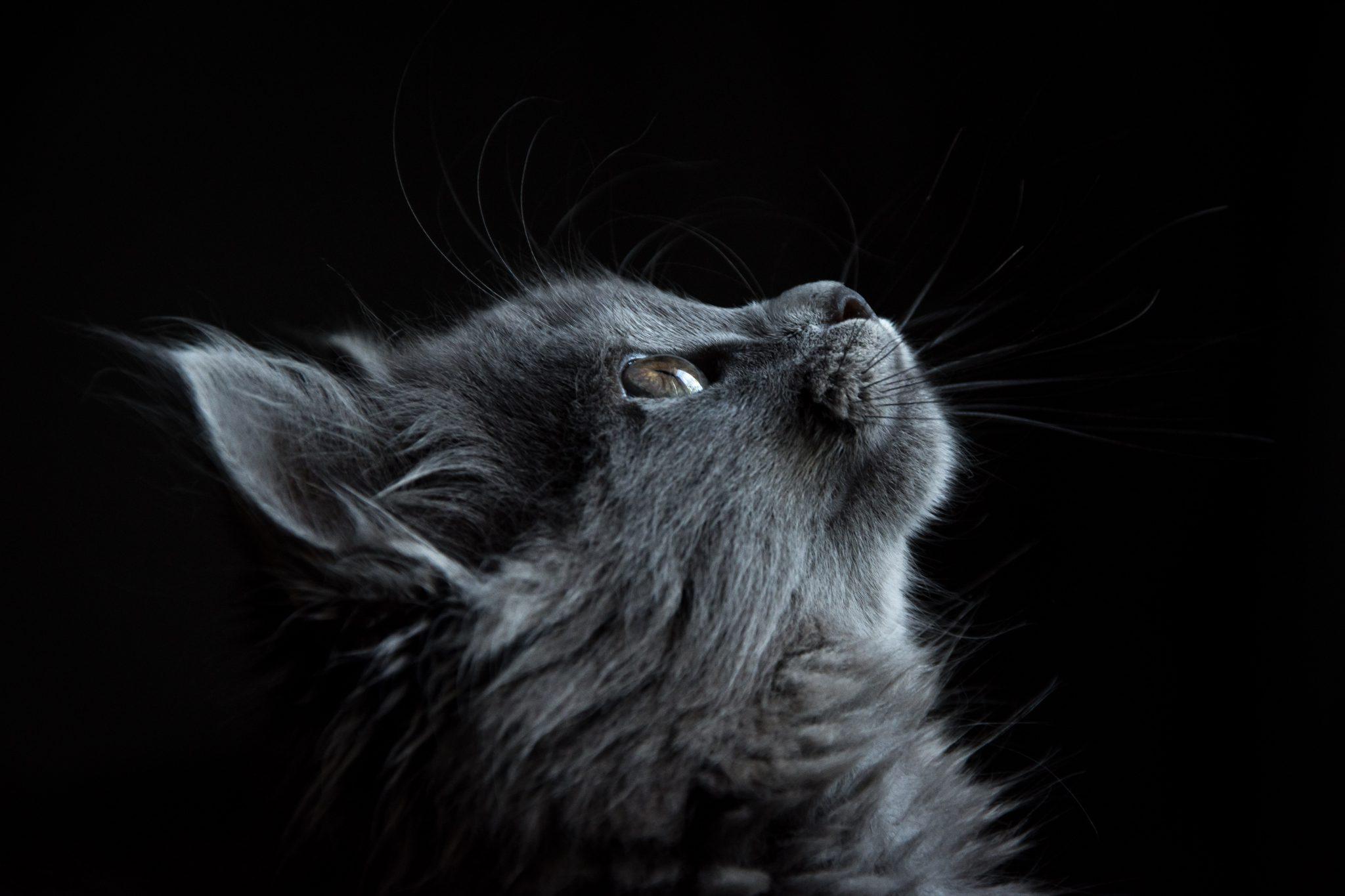 고양이 코 옆모습