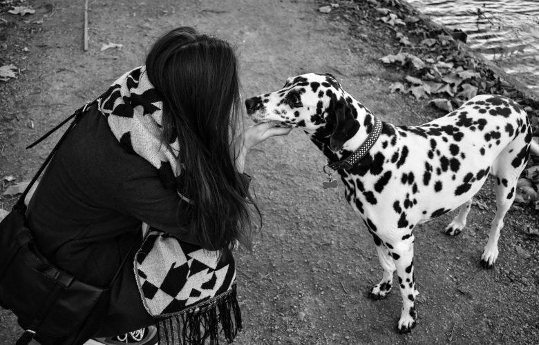 처음 만난 강아지