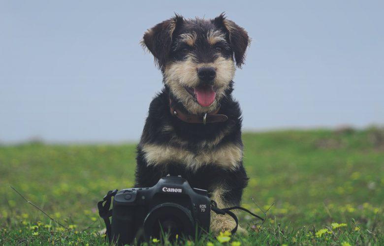 강아지 카메라