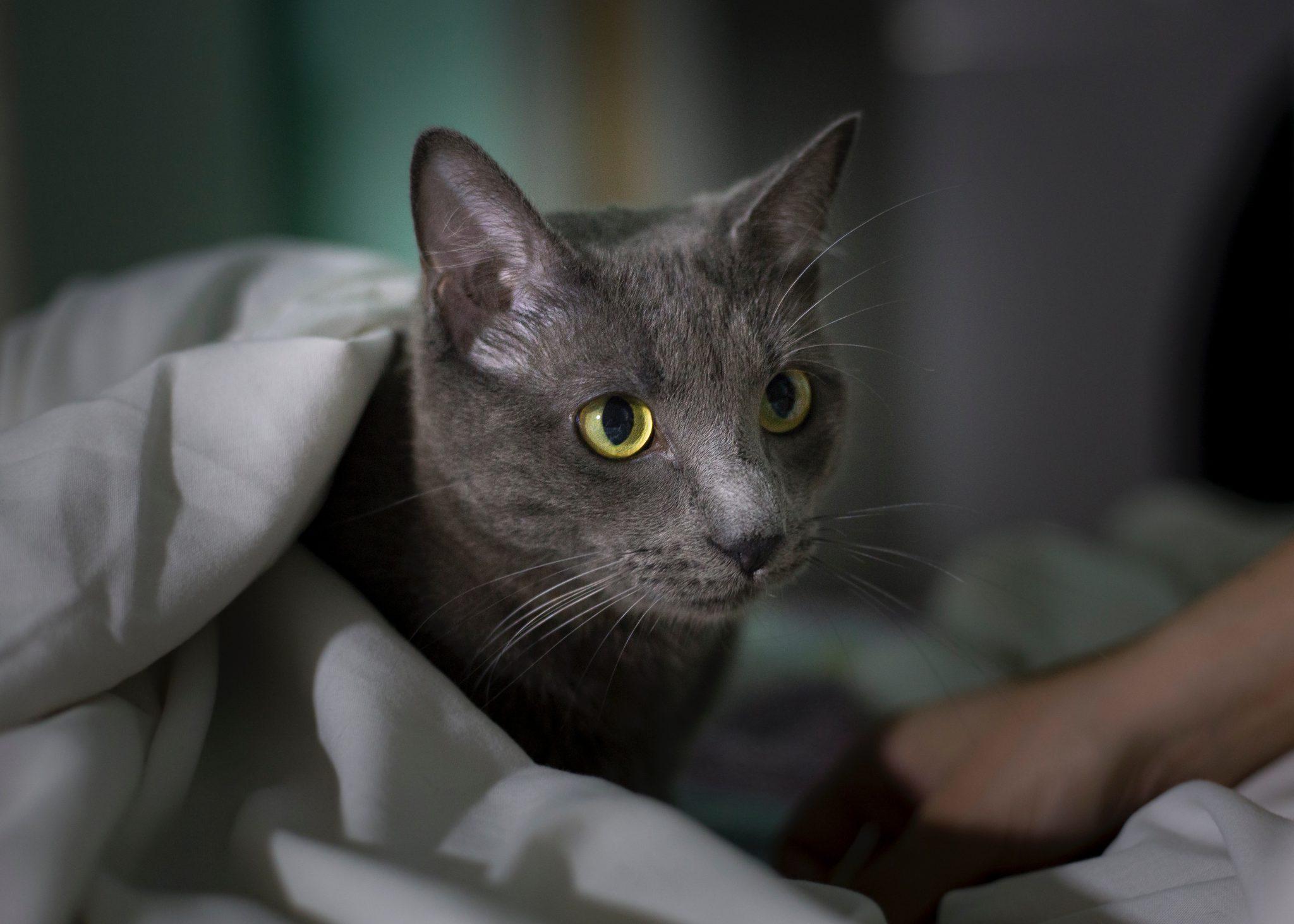 집사 깨우는 고양이