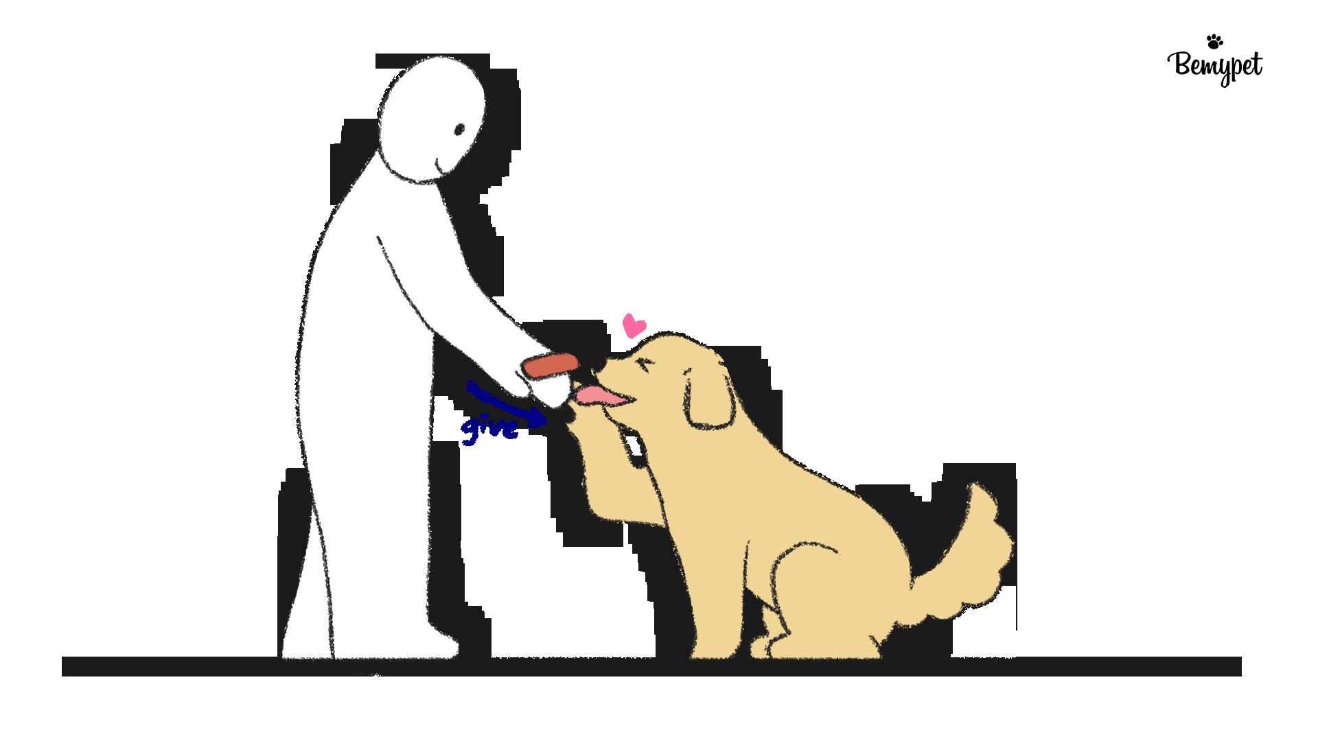강아지 손 훈련