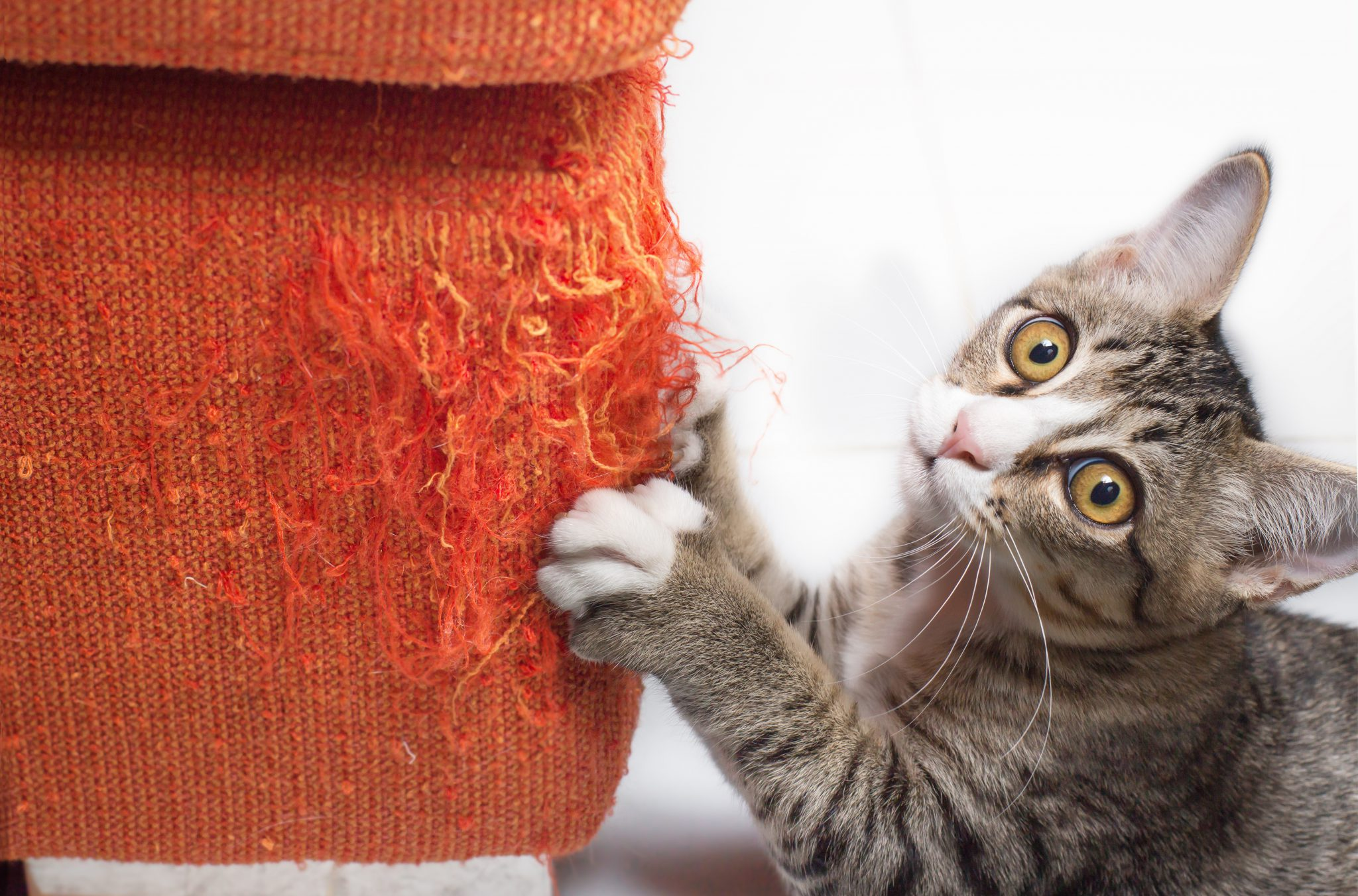 고양이 스크래쳐