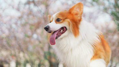 강아지 혀 색깔