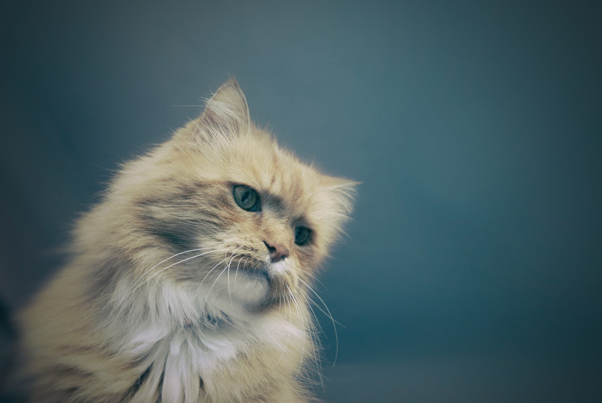 우울한 고양이
