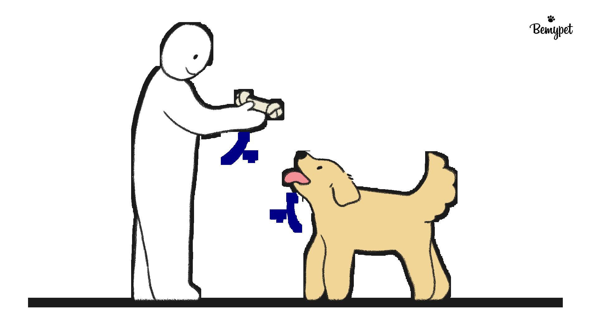 강아지 앉아 훈련