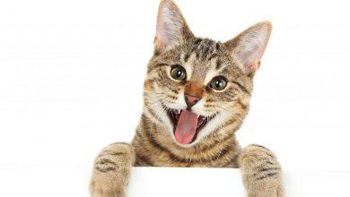 고양이 행복
