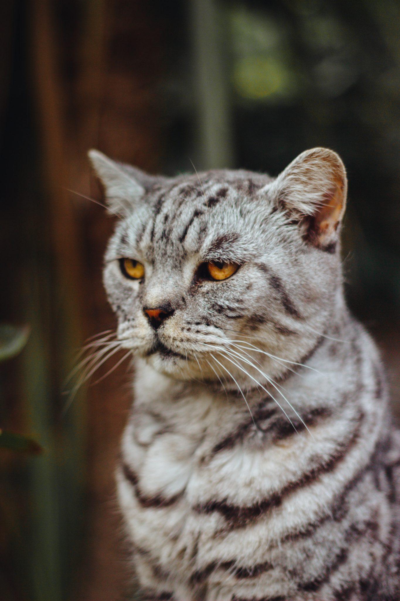 고양이 표정