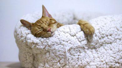 고양이 침대