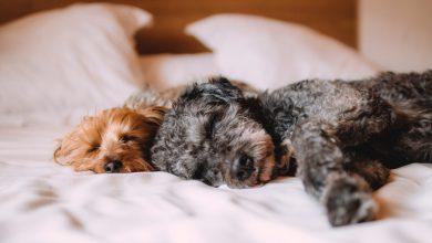 강아지 침대