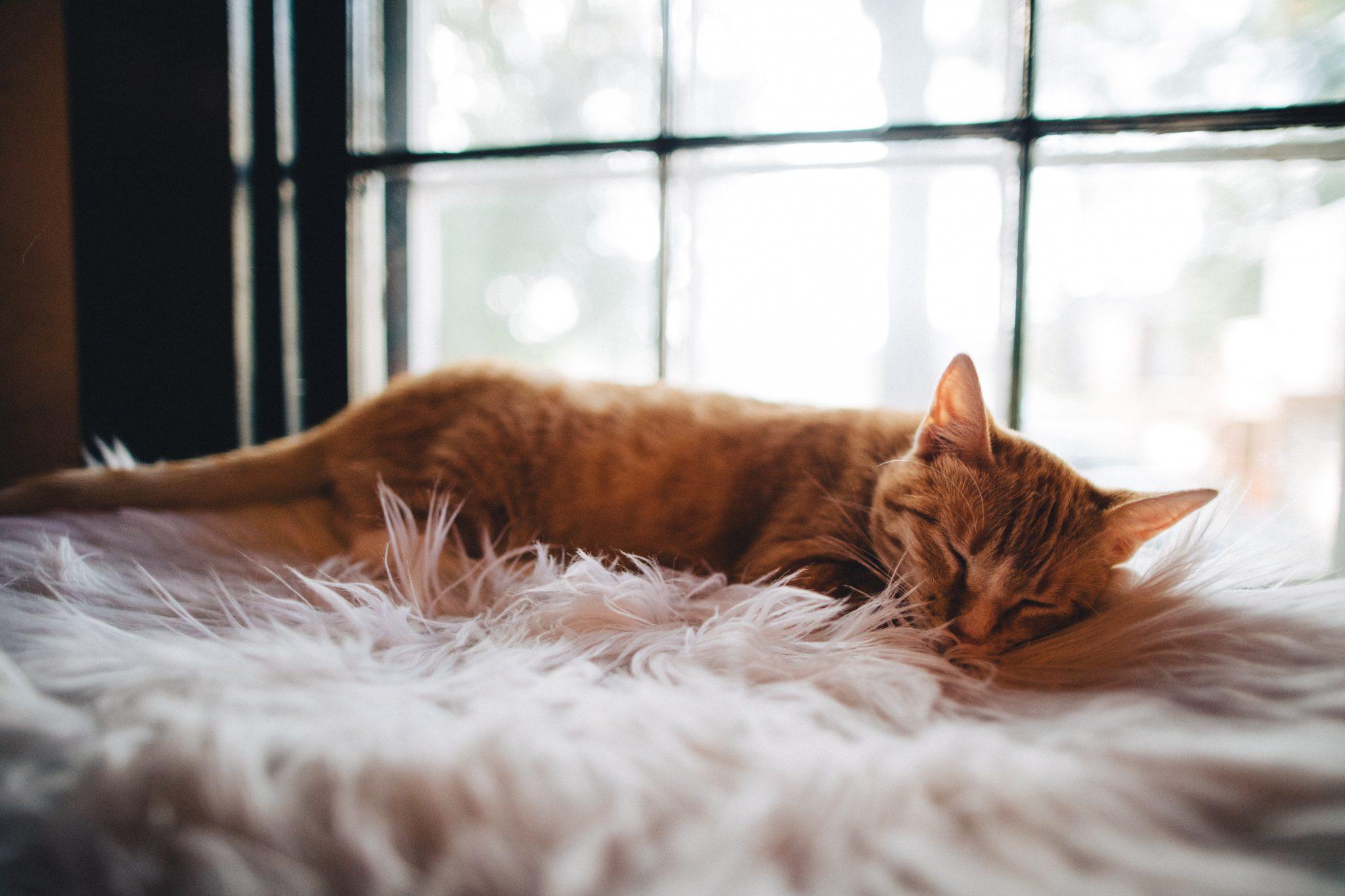 고양이 수면