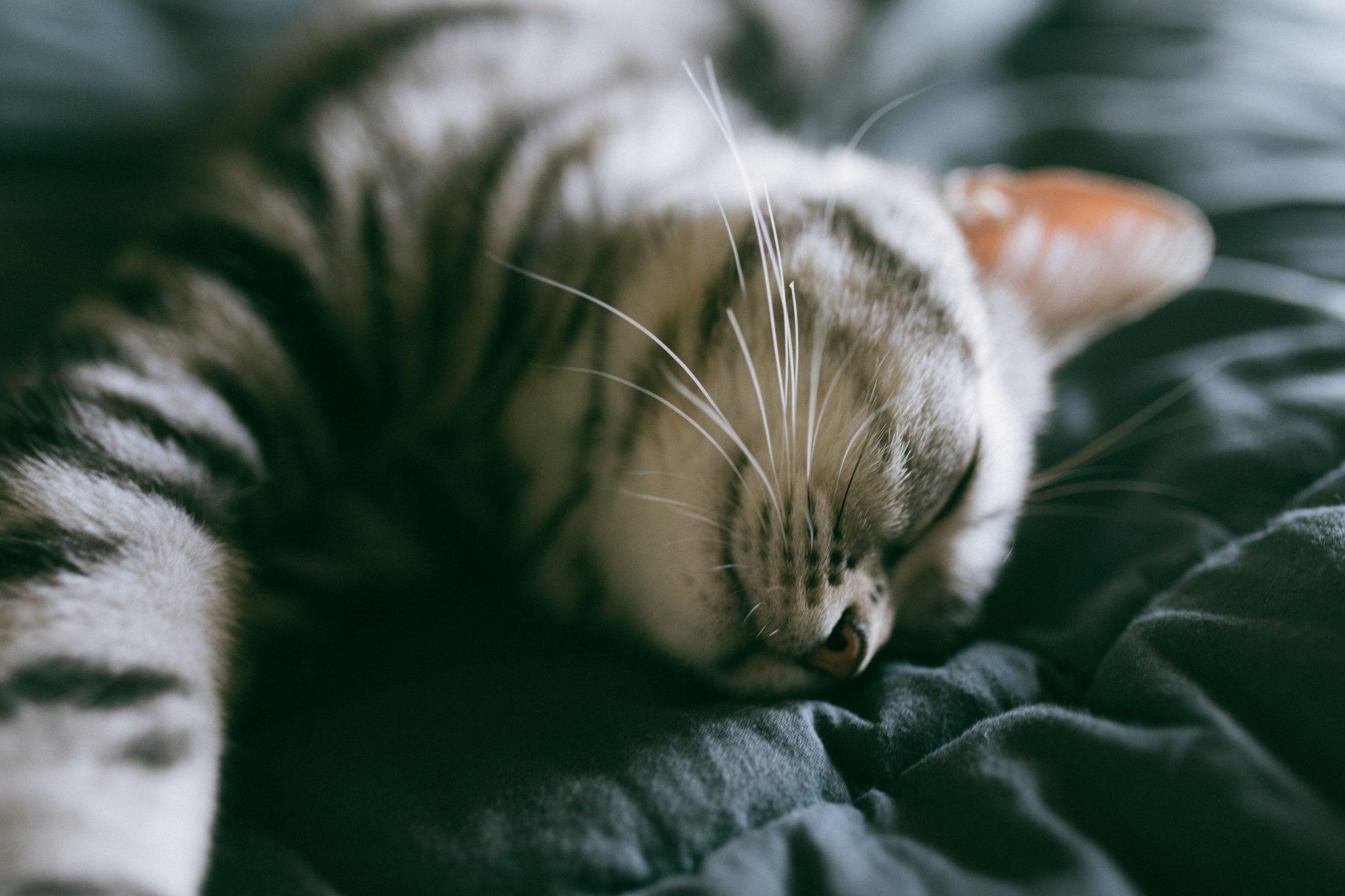 고양이 수면시간