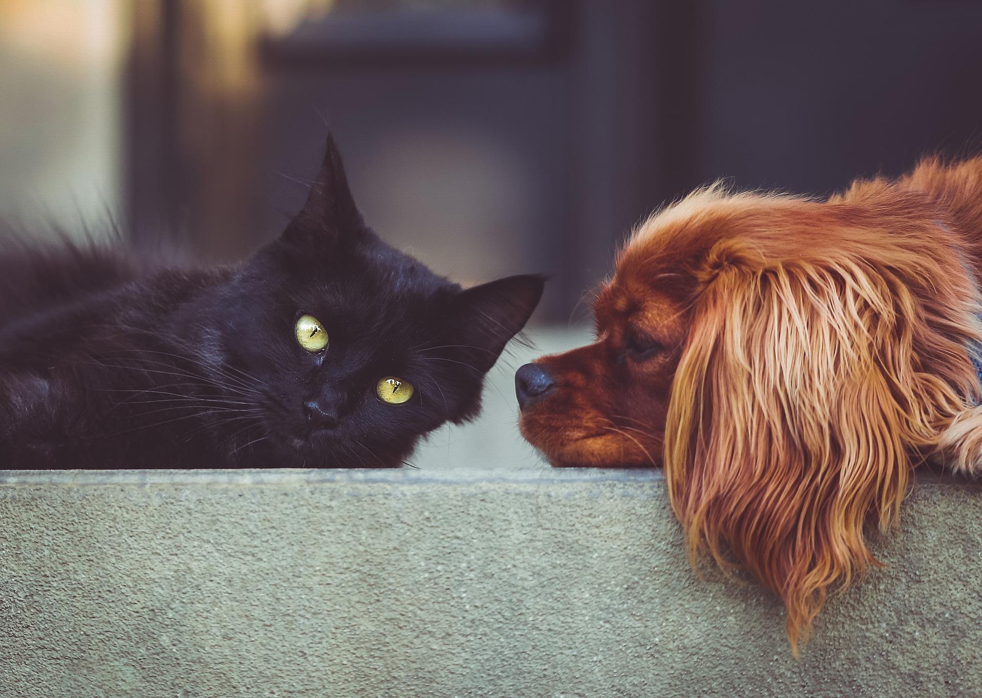 강아지 고양이