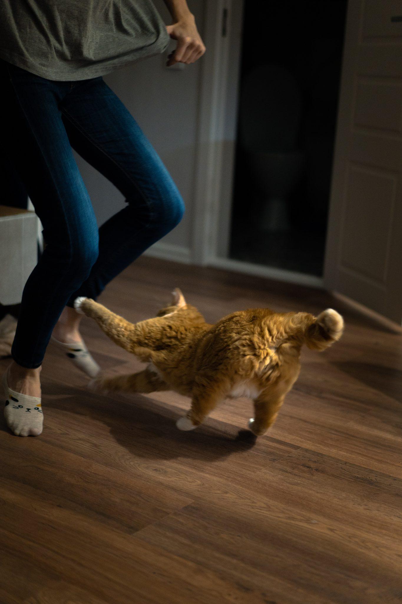 고양이 공격