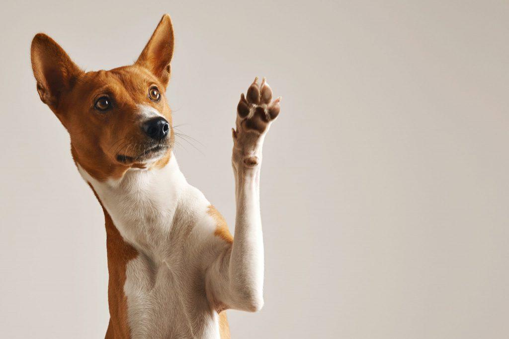 강아지 애교