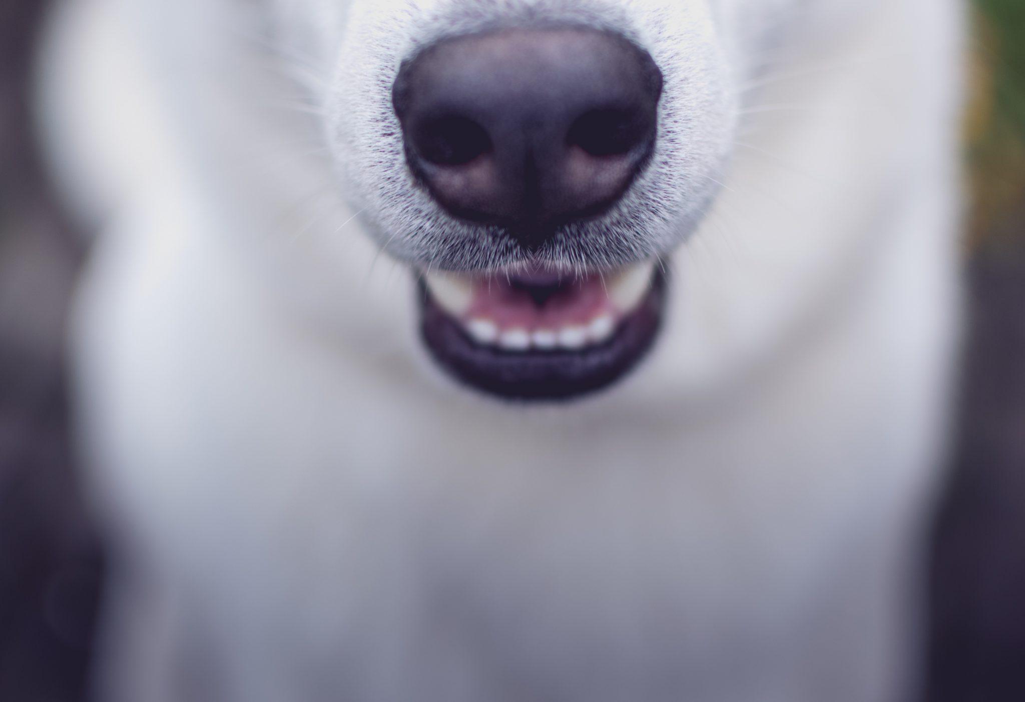 강아지 이갈이