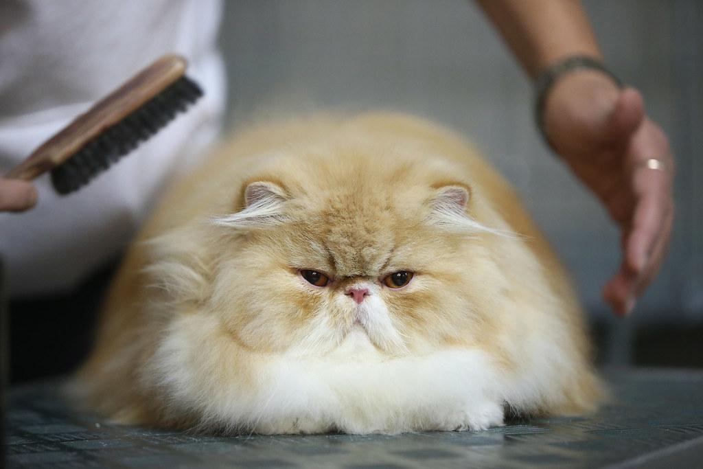 고양이 빗질