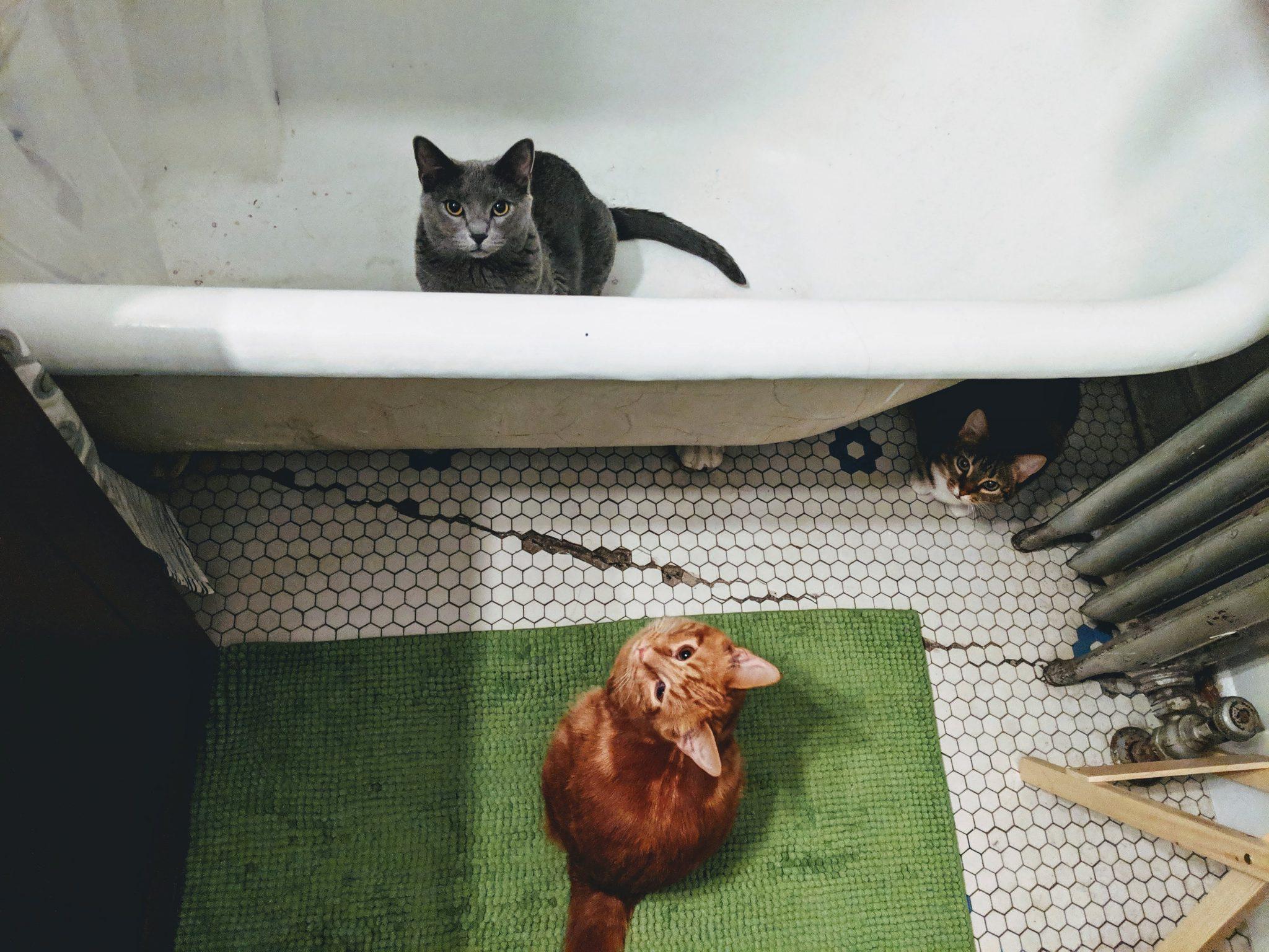 화장실 따라오는 고양이