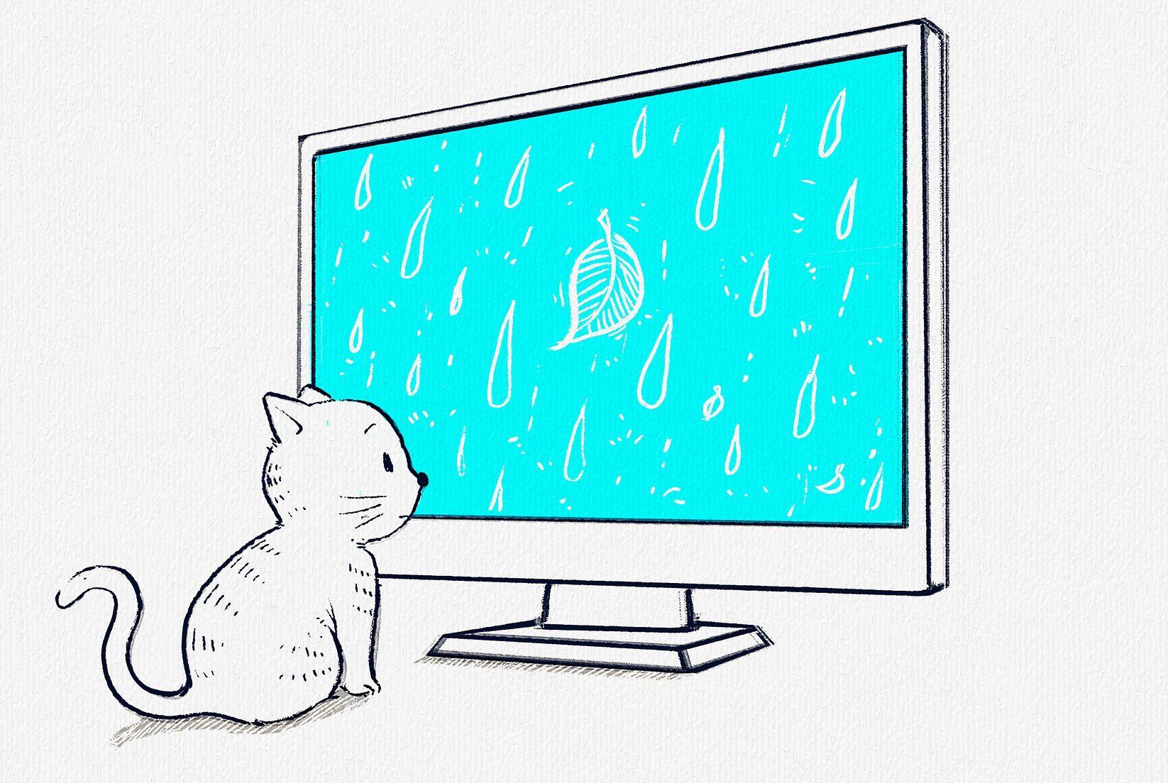 고양이 티비