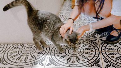 고양이 박치기