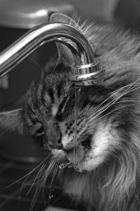 고양이 급수량 늘리기