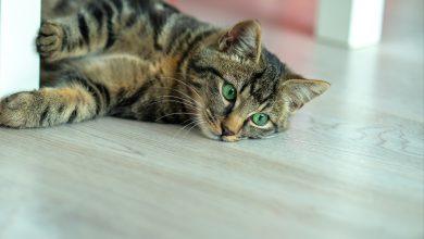 고양이 천식