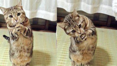 고양이 키우면
