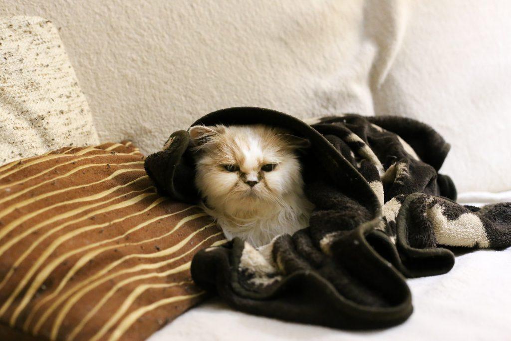 고양이 괴로워