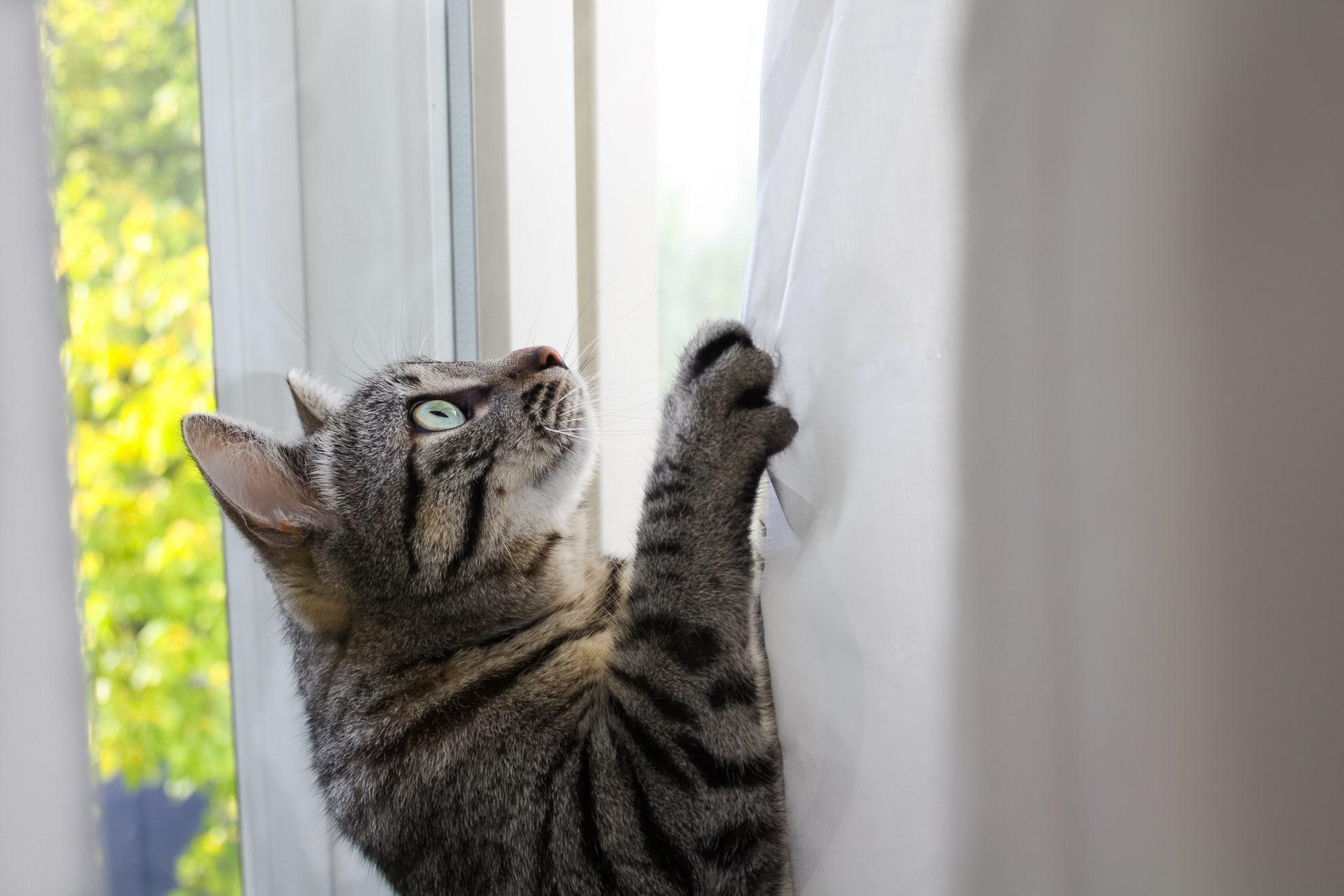 고양이 커튼
