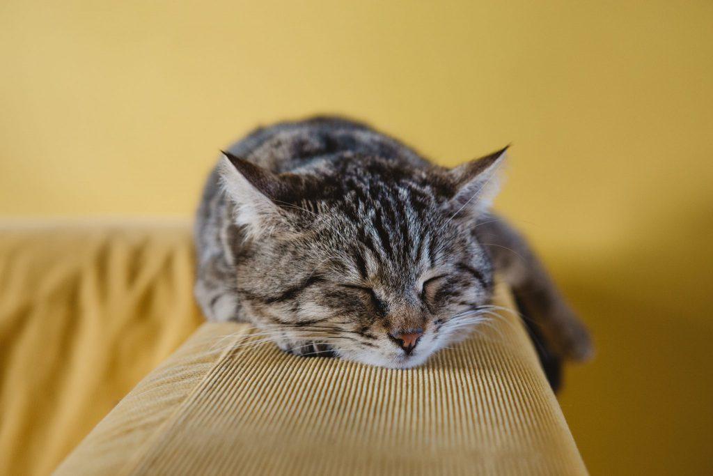 고양이 잠자리